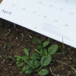 Thumbnail of calendar with plants