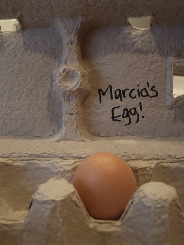 Marcia's first egg