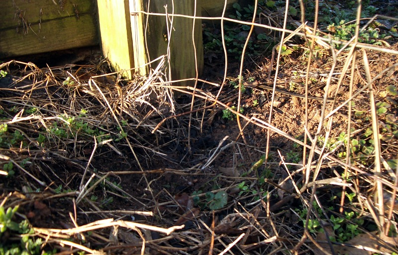 Fence Hole 1